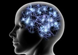 dipartimento neuroscienze